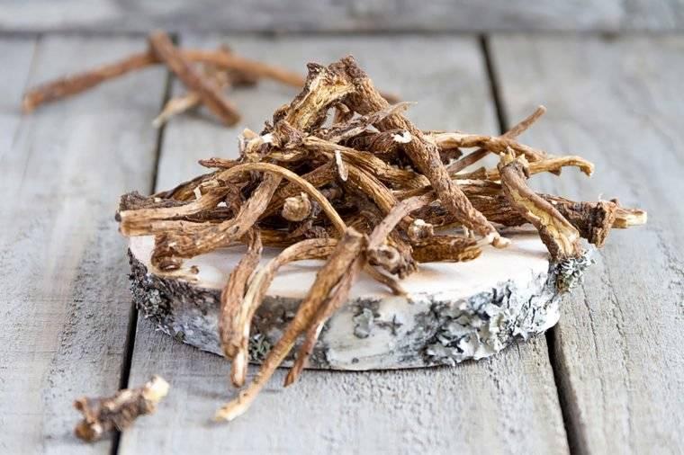 Лечебные свойства корня одуванчика, заготовка и приготовление