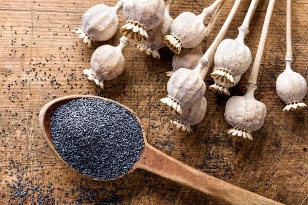 Пророщенный мак полезные свойства. маковые семена: польза и вред. применение мака в народной медицине