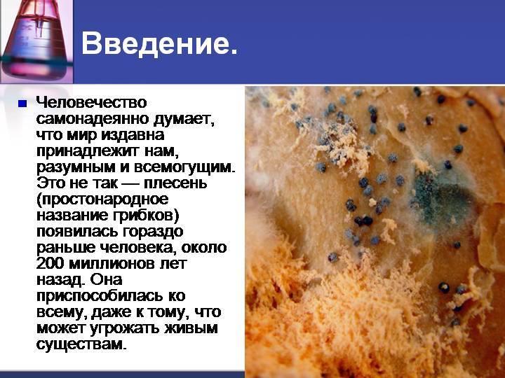 Польза и вред грибов для организма человека