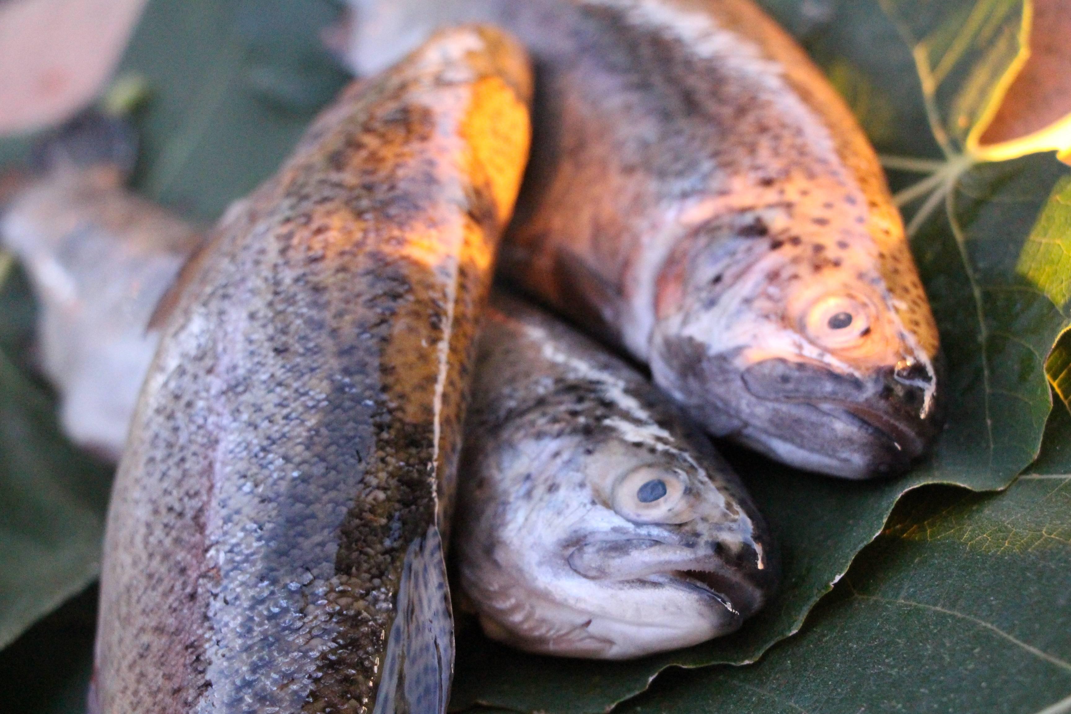 Рыба форель польза и вред
