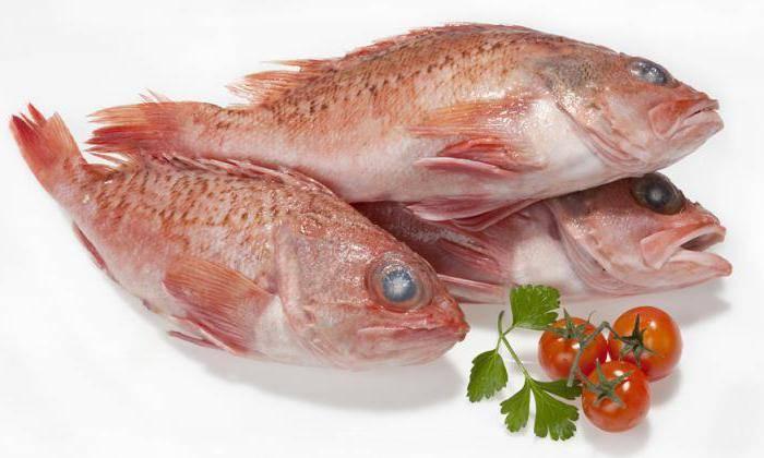 Морской окунь: описание, калорийность, бжу, польза и вред