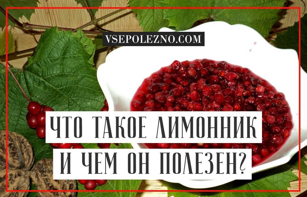 Чай из листьев лимонника польза и вред