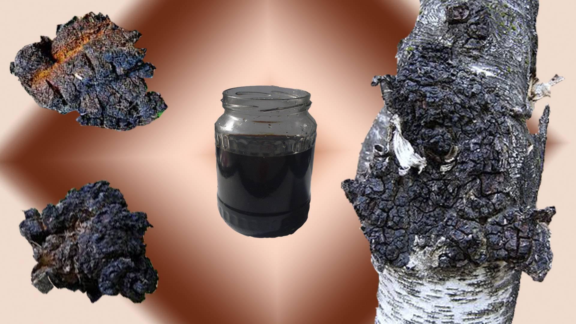 Березовый гриб чага: полезные свойства и применение.