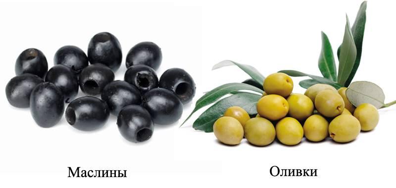 Оливки и маслины – в чем разница? цвет имеет значение