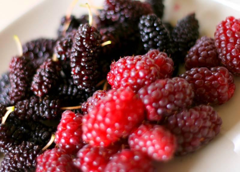 Шелковица: свойства, польза и вред ягоды для организма