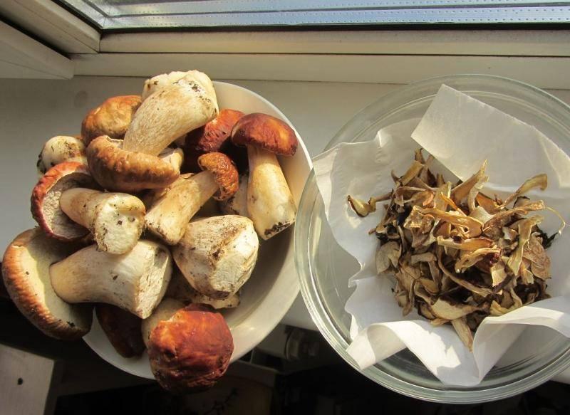 Как хранить сушеные грибы в домашних условиях: 5 правил