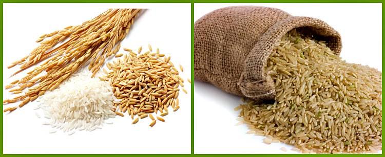 Как выглядит коричневый рис