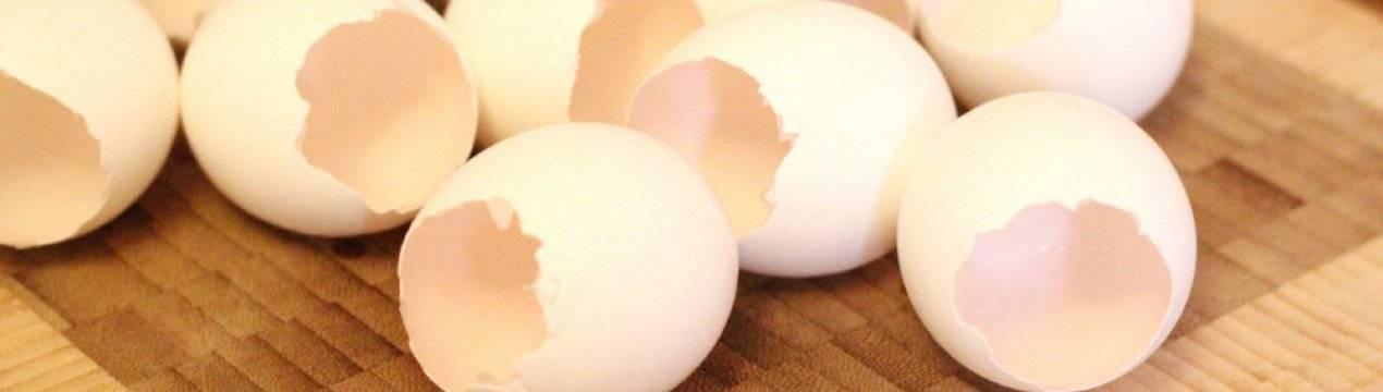 Целебные свойства яичной скорлупы: простейший способ быть здоровым