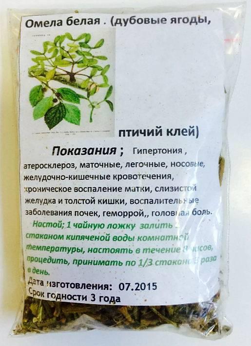 Лечебные свойства омелы белой и противопоказания