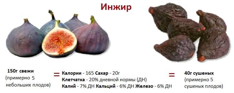Инжир – плод молодости и здоровья, почитаемый клеопатрой