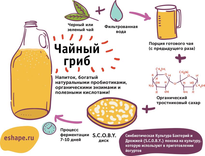 Все, что важно знать про чайный гриб: польза и вред