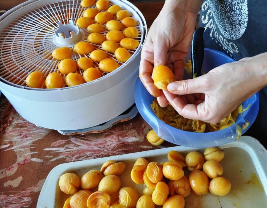 Как сделать курагу в домашних условиях? как сушить абрикосы на курагу