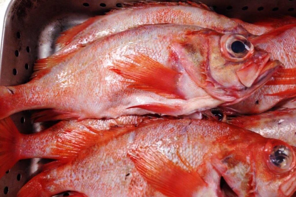 Польза и вред морского окуня: что побеждает и почему