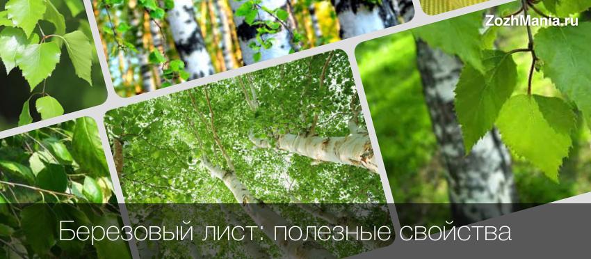 Как пить отвар березовых листьев и чем он полезен