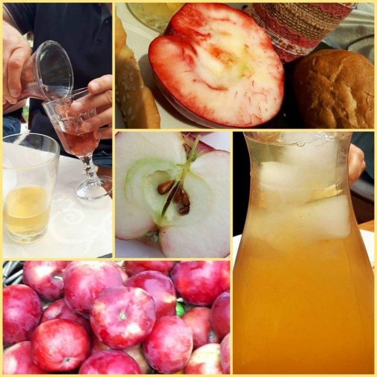 Яблочный сидр: полезные свойства и вред