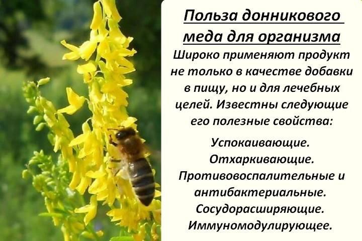 Медом из этого растения в древности на руси лечили подагру — мед донника. удивительные целебные свойства и противопоказания в использовании меда