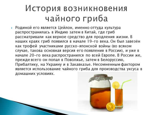 Комбуча — новое имя чайного гриба. чем полезен чайный гриб и как его вырастить?