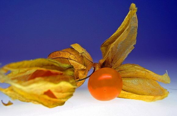 Физалис — полезные свойства, как употреблять в пищу и вред для здоровья .