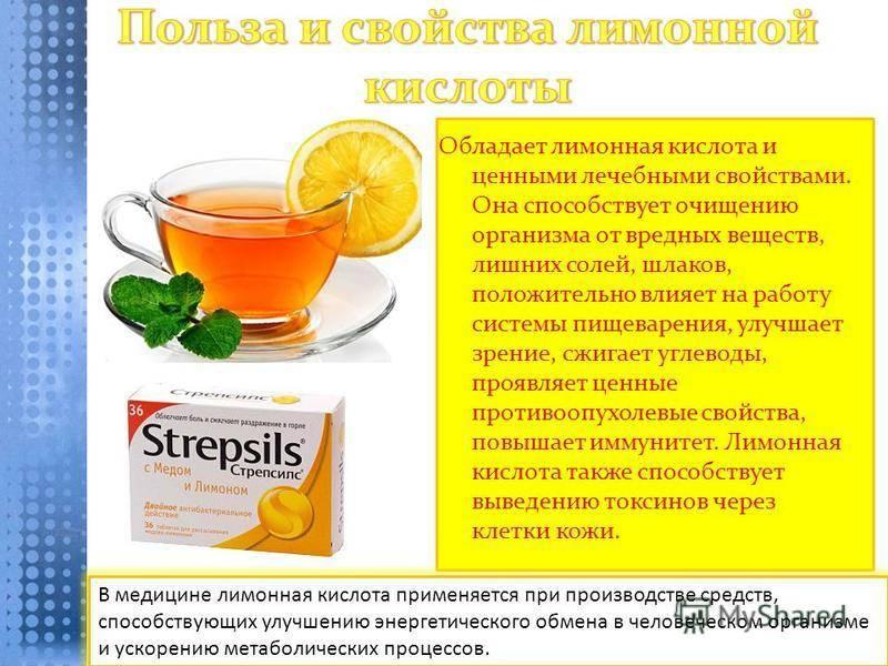 Лимонник китайский: полезные свойства, противопоказания, польза и вред