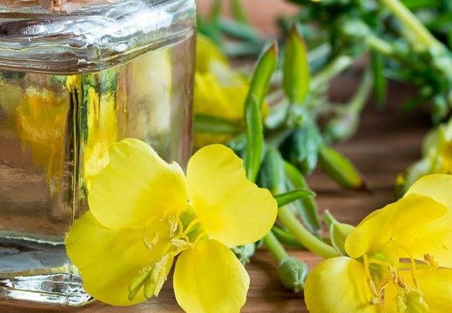 Масло примулы вечерней — полезные свойства и лечебное действие