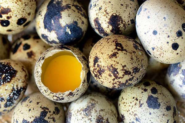 Яйца при беременности: можно ли беременным яйца
