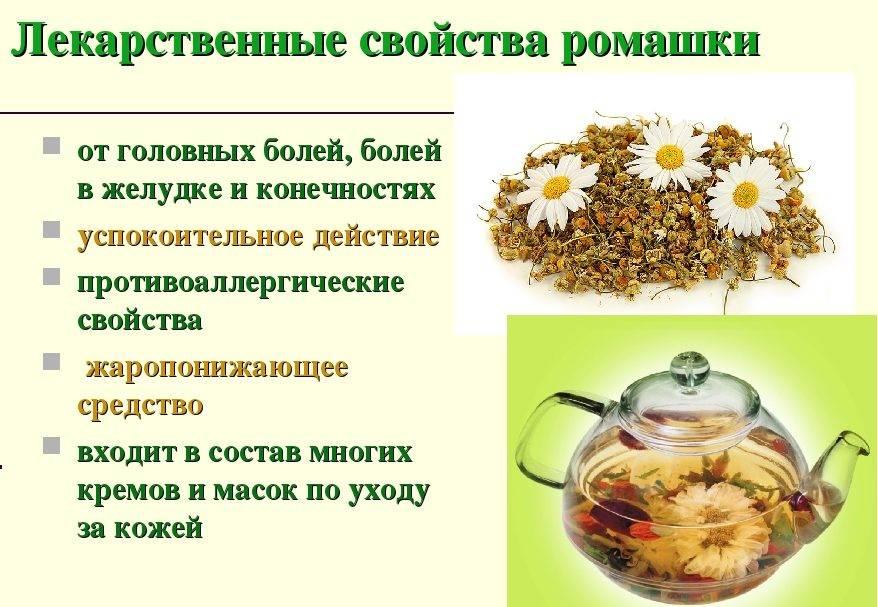 Лечебные свойства и противопоказания ромашки для женщин
