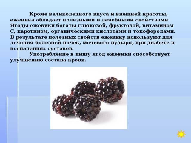 Ежевика польза и вред для здоровья женщины