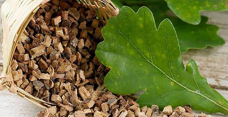 Кора дуба: лечебные свойства, применение, рецепты