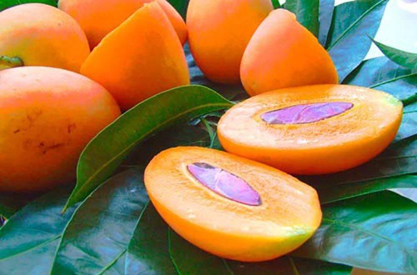 Чемпедак что за фрукт, чем полезен для организма человека и как его едят