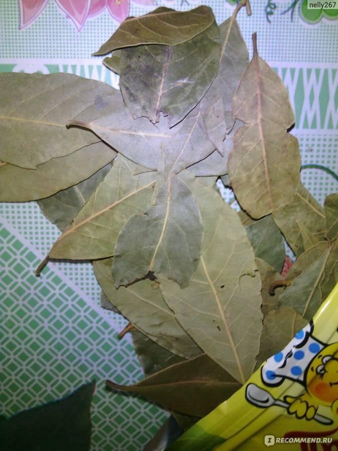 Король специй: как сушить лавровый лист