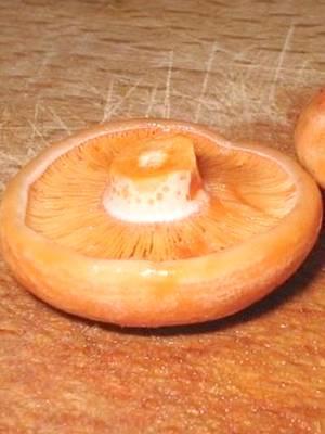 Грибы рыжики польза и вред для организма человека