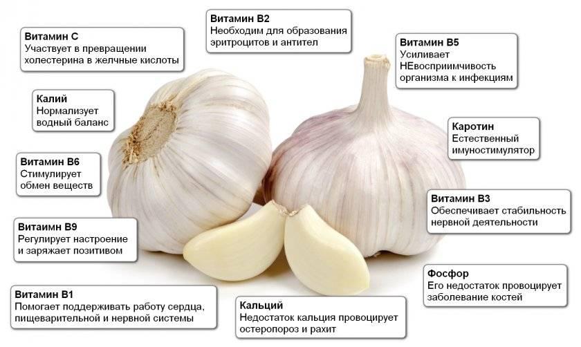 Всем по чесноку или овощ, который знает всё о нашем здоровье