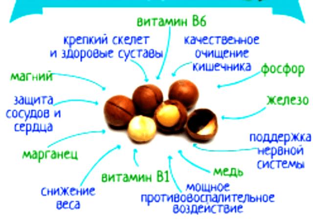 Орехи макадамия, польза и вред для организма человека