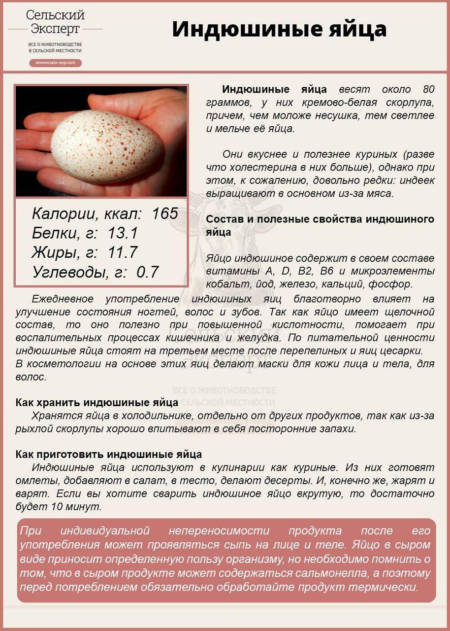 Индюшиные яйца: свойства, хранение и сбор яиц индюшки