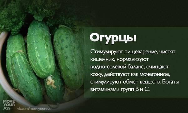 Польза огурцов для организма человека и возможный вред здоровью