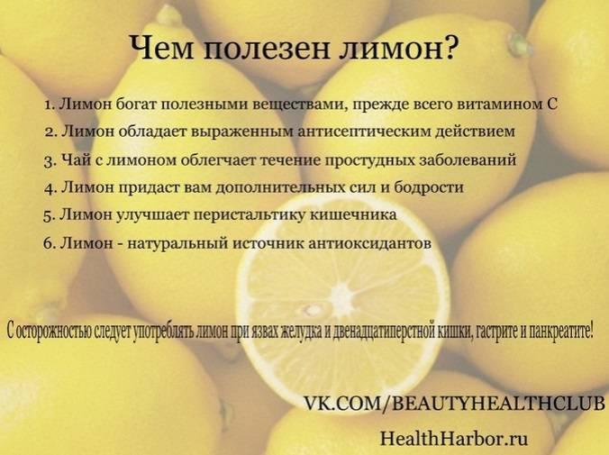 Инструкция по применению настойки лимонника: полезные свойства и противопоказания