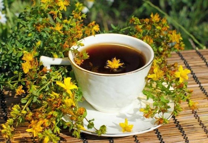 Чай из зверобоя: польза и вред для организма, показания к применению