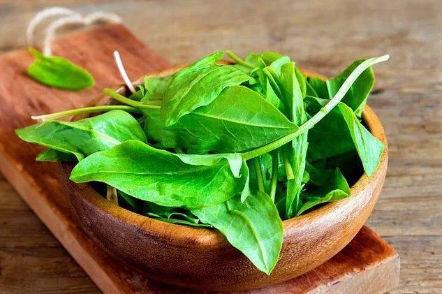Щавель — польза и вред для нашего здоровья