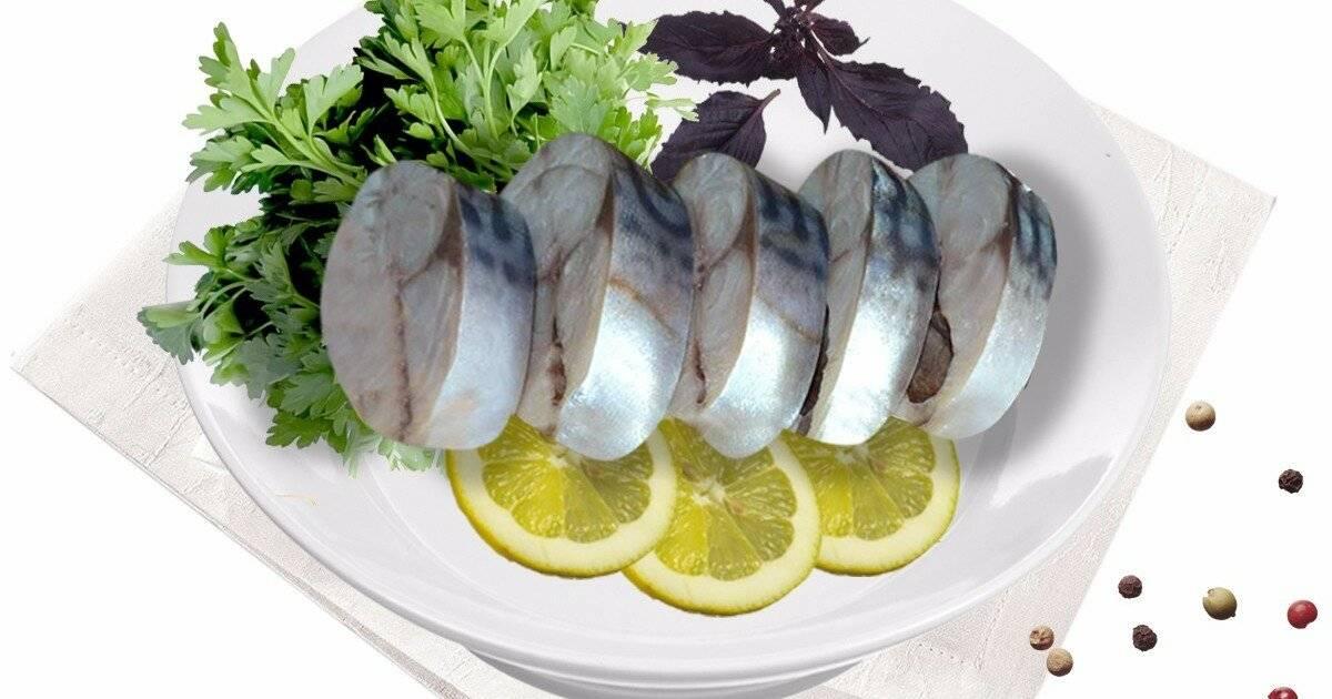 Рыба скумбрия, польза и вред для организма человека