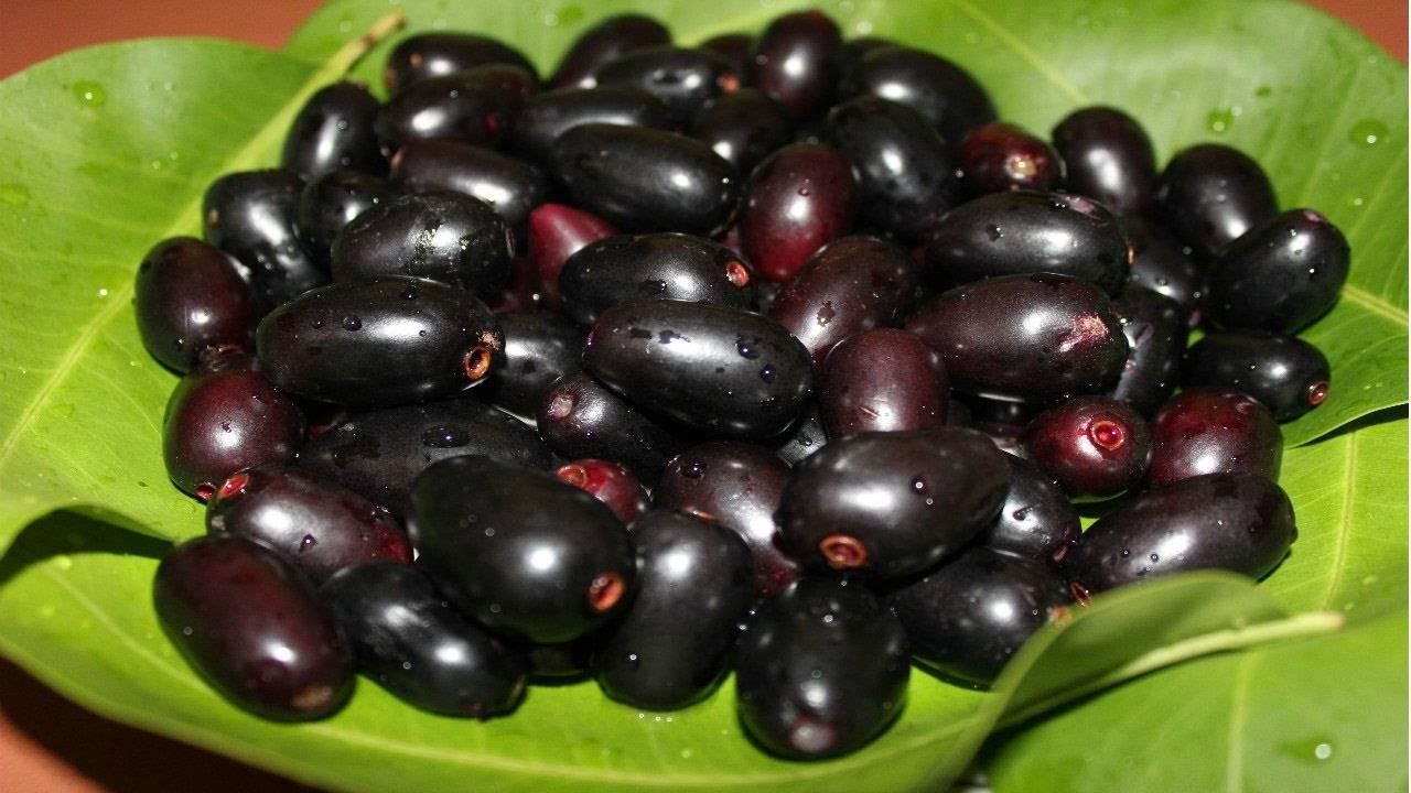 Что за фрукт лонган, где его выращивают, как едят и чем он полезен