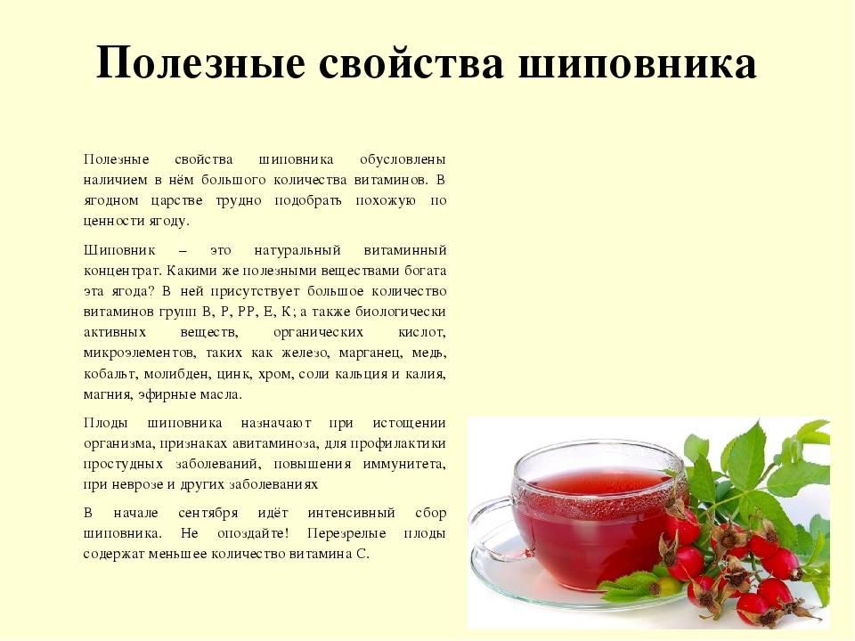 Сироп шиповника: влияние на организм, польза и вред