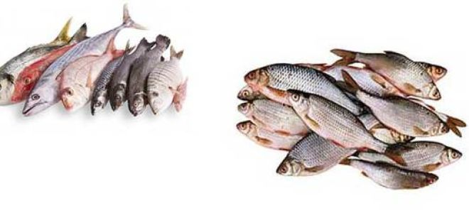 Лещ: описание, состав, калорийность, польза и свойства леща, лещ в кулинарии