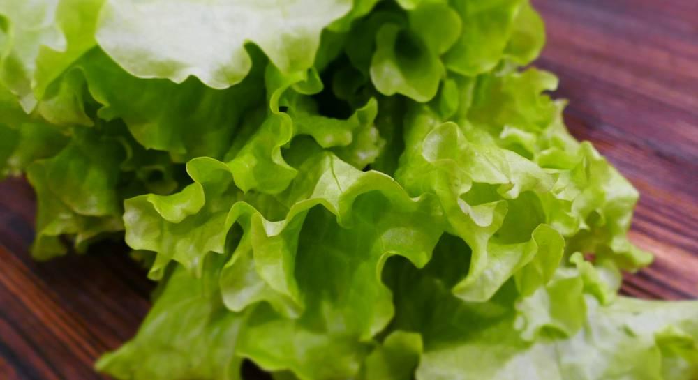Польза и вред зеленого салата