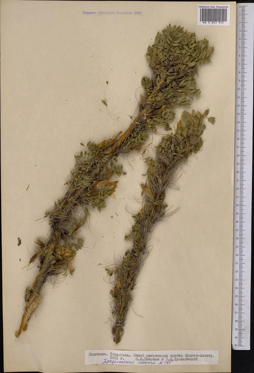 Верблюжий хвост трава применение при кашле