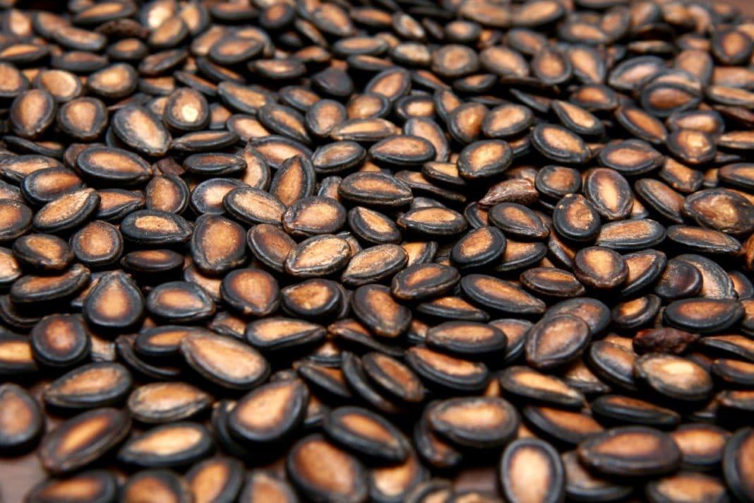 А полезно ли есть арбузные семечки – важные советы и секреты