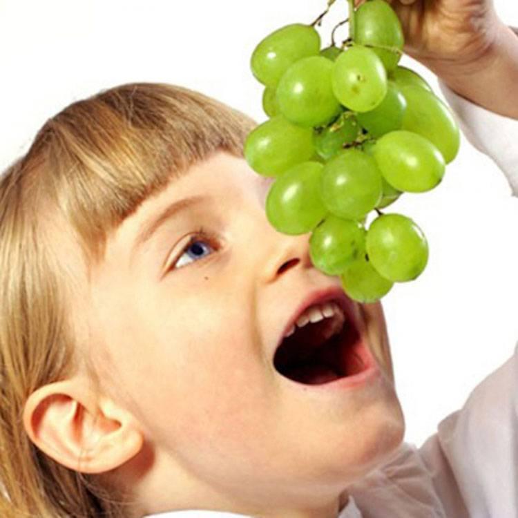 Сок виноградной лозы: полезные свойства, показания и противопоказания, особенности приготовления