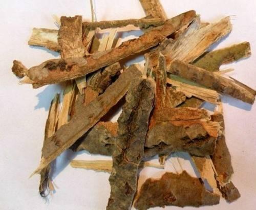 Чем полезна кора осины и как ее применяют в лечении