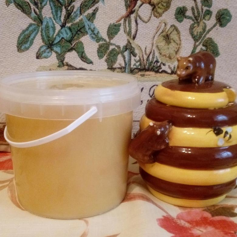Донниковый мед: лакомство и лекарство