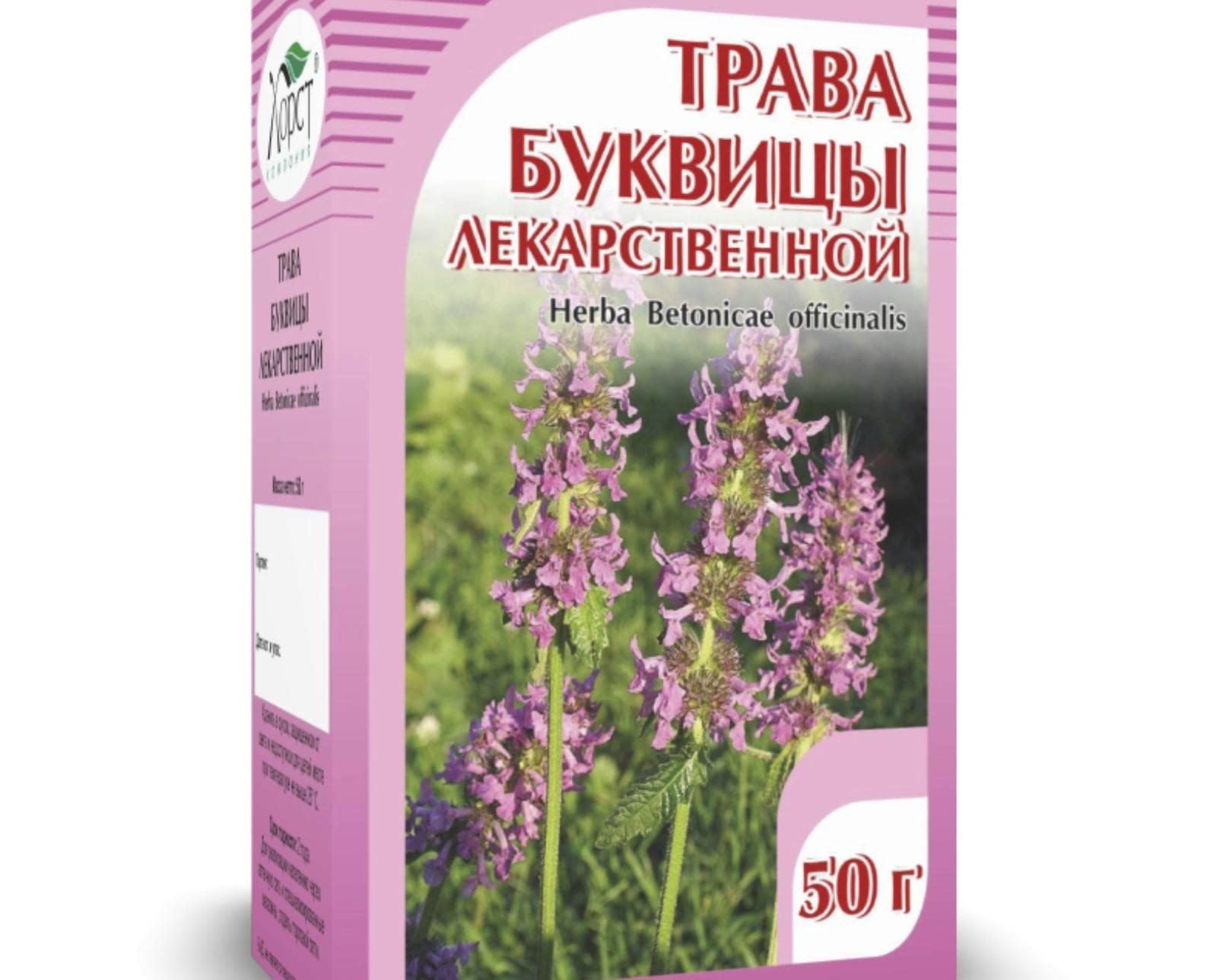 Описание растения буквица лекарственная, как применять, противопоказания