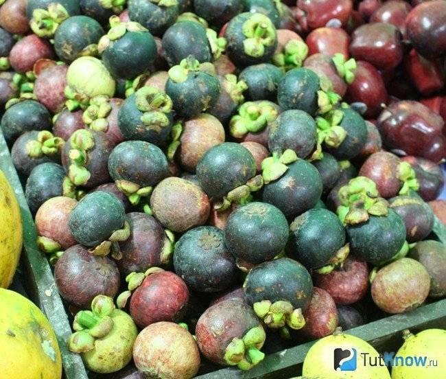Фрукт мангустин: как его едят, как чистить, какой на вкус, как выглядит, где и как растет, польза и вред